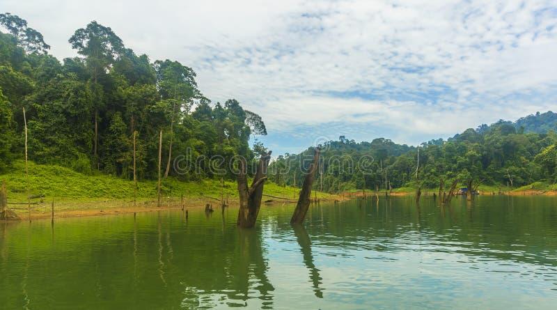 Forêt tropicale et arbre mort photos libres de droits