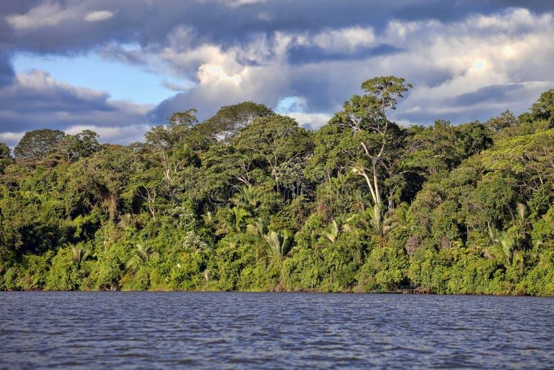 Forêt tropicale le long de la rivière de Tambopata, Pérou photos stock