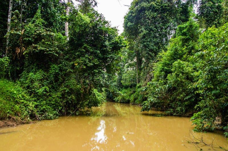 Forêt tropicale luxuriante le long de l'eau jaune Sabah, Bornéo malaysia photos libres de droits