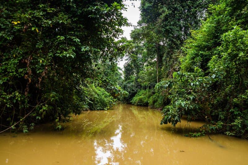 Forêt tropicale luxuriante le long de tributaire jaune de l'eau de riv de Kinabatangan photographie stock libre de droits