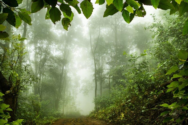 Forêt tropicale moussue, foyer mou photographie stock libre de droits