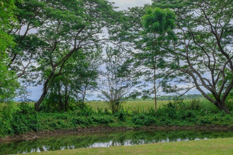 Forêt tropicale profonde dans le frome Thaïlande de prachubkirikhun de parc national de Khao Samroiyod photo stock