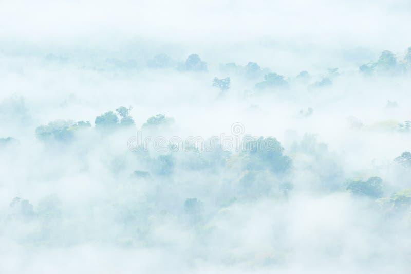 Forêt tropicale rêveuse fantastique dans brumeux Brume et gree blancs photos libres de droits