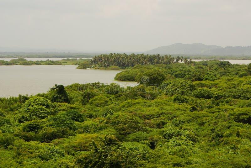 Forêt tropicale reflétée dans les eaux, sur Rio Negro dans le bassin du fleuve Amazone, le Brésil, Amérique du Sud photographie stock