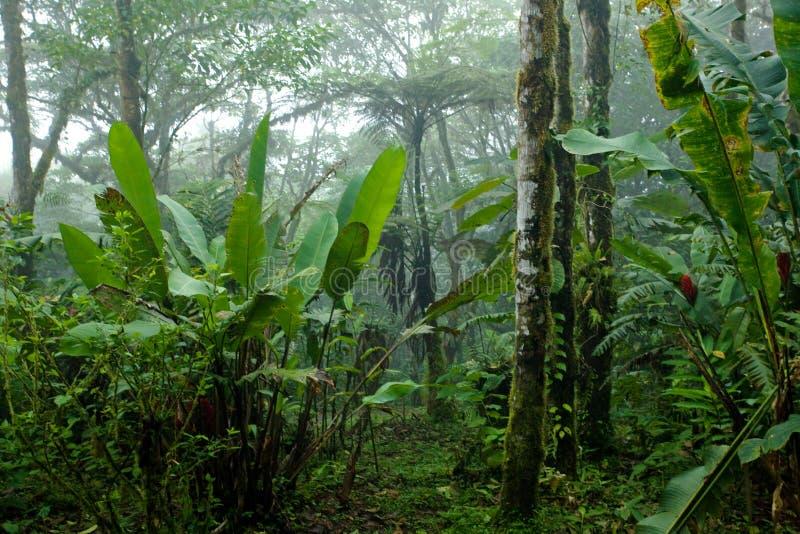 Forêt tropicale tropicale brumeuse, dense, luxuriante en Costa Rica photographie stock