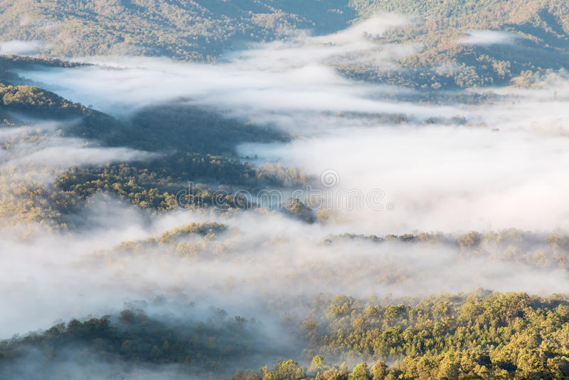 Forêt tropicale tropicale en parc national de Tamborine, Australie photos libres de droits