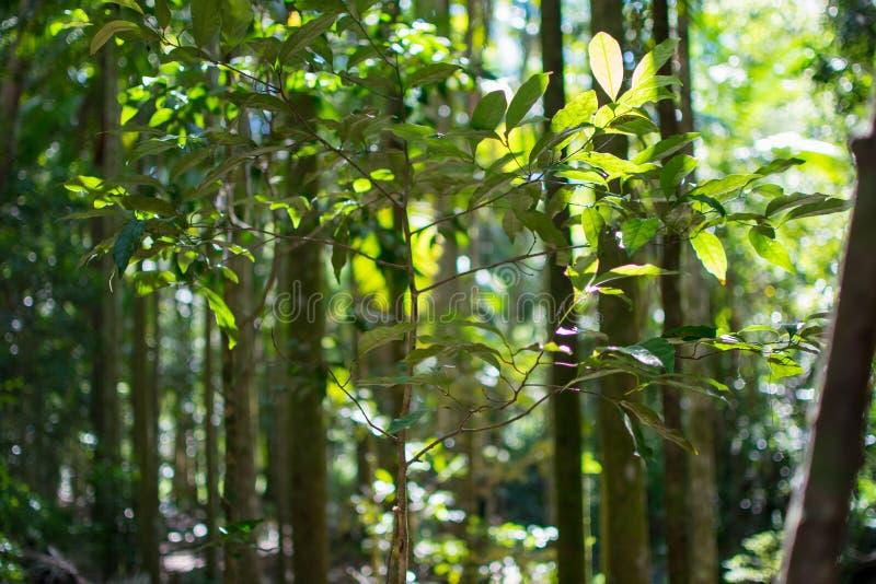 Forêt trouble avec la lumière du soleil photographie stock