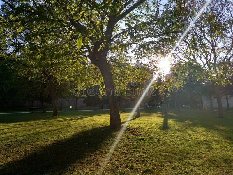 Forêt urbaine dans le printemps du ` s de Valence photo stock