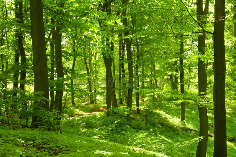 Forêt verte photo stock