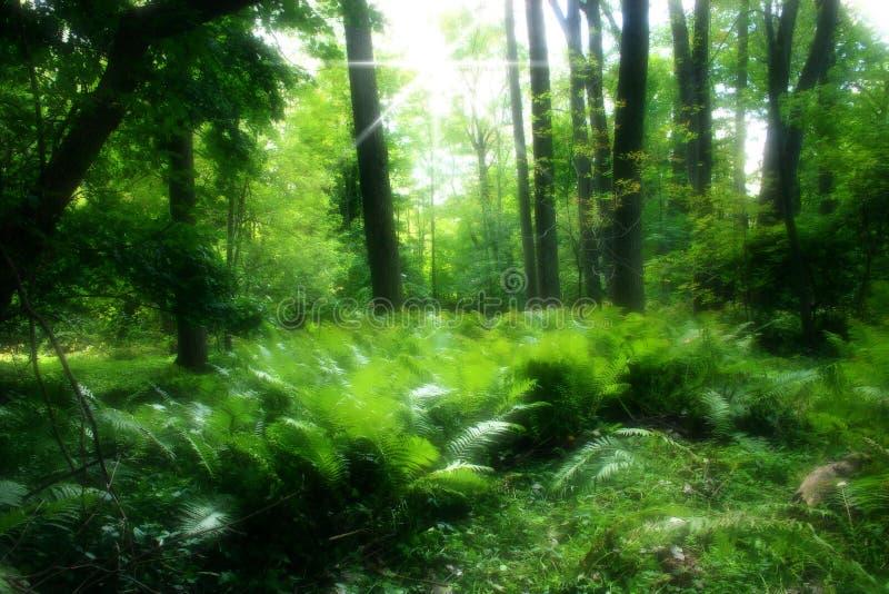 Forêt verte abondante photo stock
