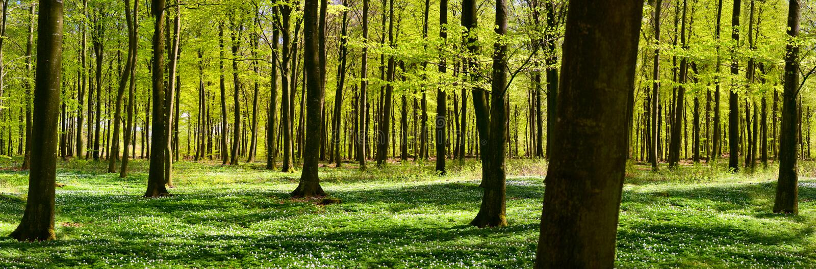 Forêt verte au printemps photographie stock