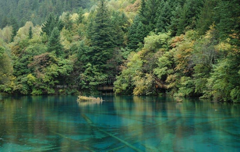 Forêt verte avec un lac bleu propre photos libres de droits