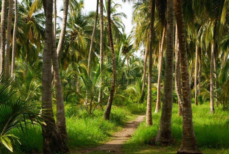 Forêt verte de paume en île colombienne Mucura photographie stock libre de droits