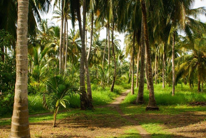 Forêt verte de paume en île colombienne Mucura photos stock
