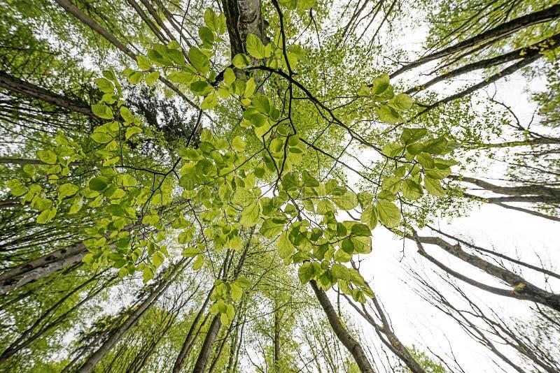 Forêt verte de ressort dans des rayons du soleil photos stock