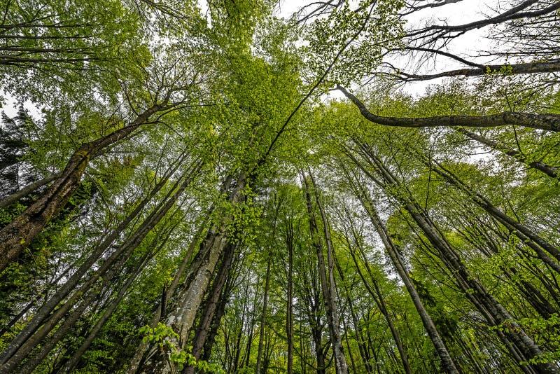 Forêt verte de ressort dans des rayons du soleil image libre de droits
