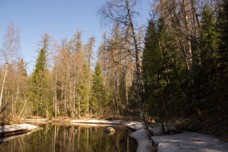 Forêt verte de ressort dans des rayons du soleil image stock