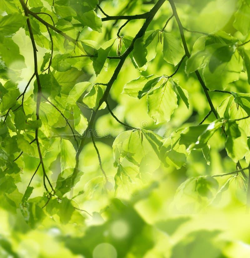 Forêt verte de ressort dans des rayons du soleil photographie stock