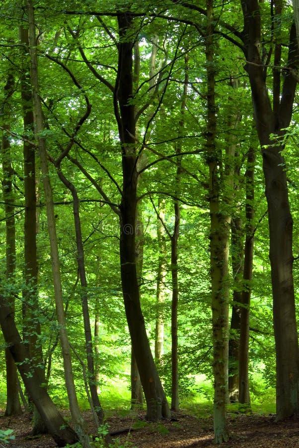 Forêt verte dense images stock