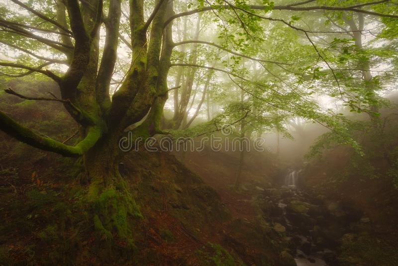 Forêt verte en parc naturel de Gorbea photo stock