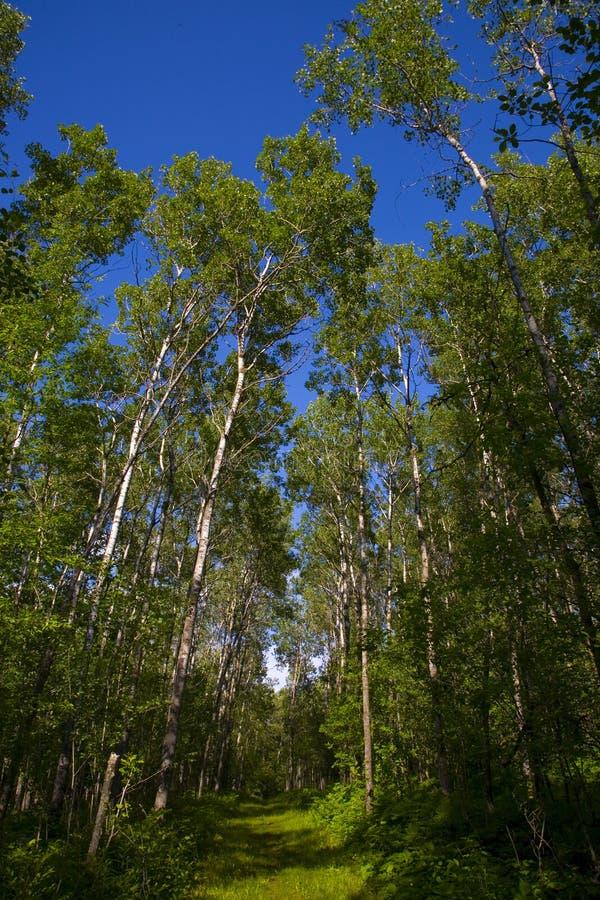Forêt verte et ciel bleu image stock