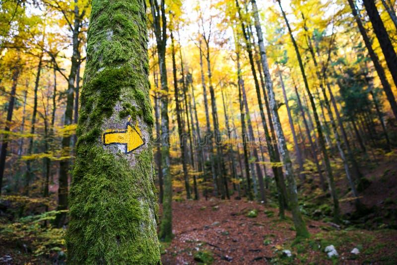 Forêt verte et jaune de sentier de randonnée de connexion peint à la main de flèche image stock