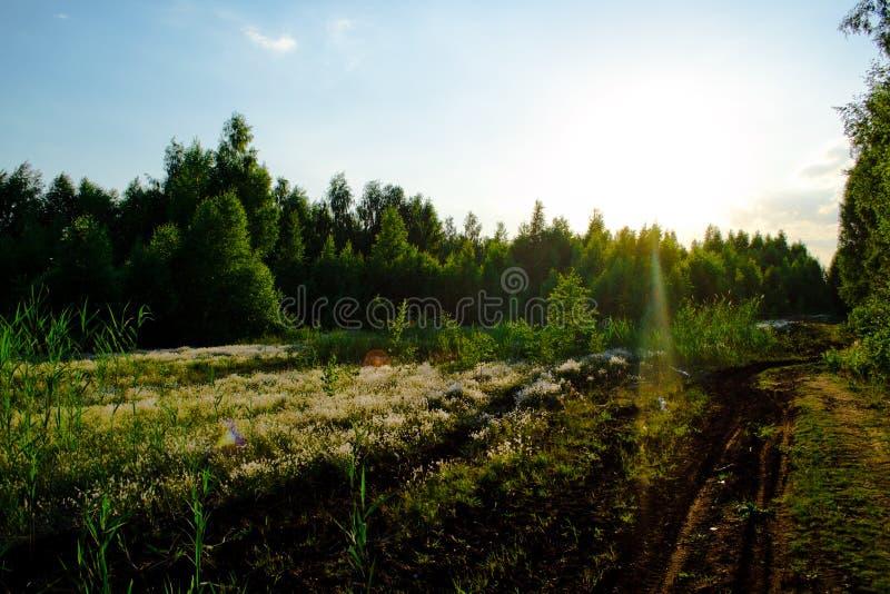 Forêt verte le soir photos libres de droits