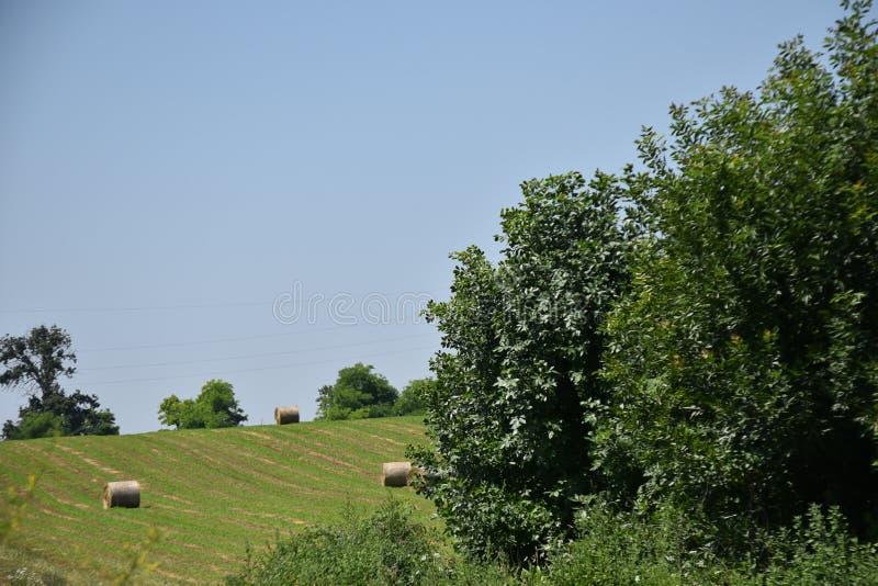 Forêt verte sur la montagne dans le vrdnik de station thermale image libre de droits