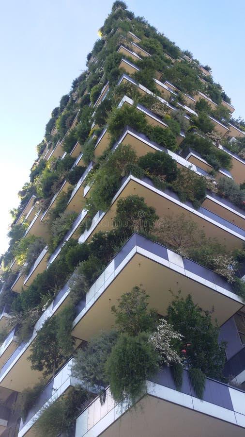 Forêt verticale photos libres de droits