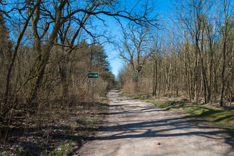 Forêt vue en premier ressort photo libre de droits
