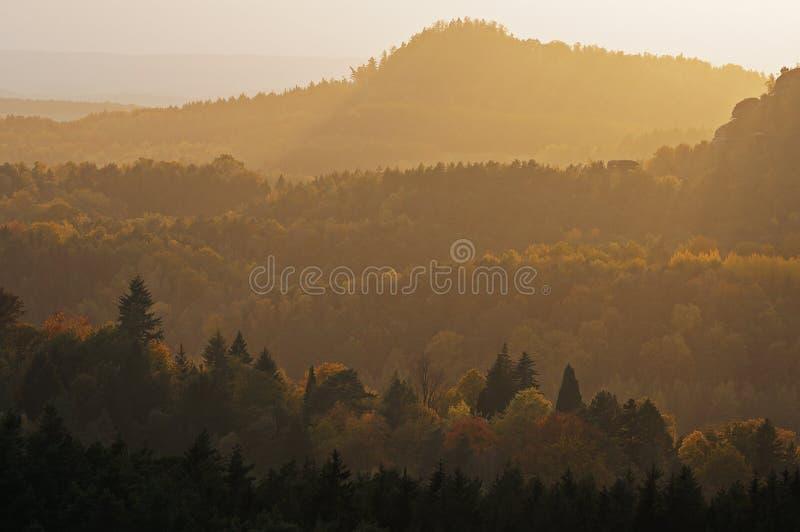 Forêts d'automne couvertes par la brume légère photos stock