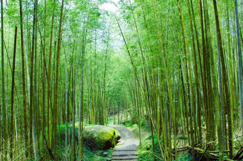 Forêts en bambou photo libre de droits
