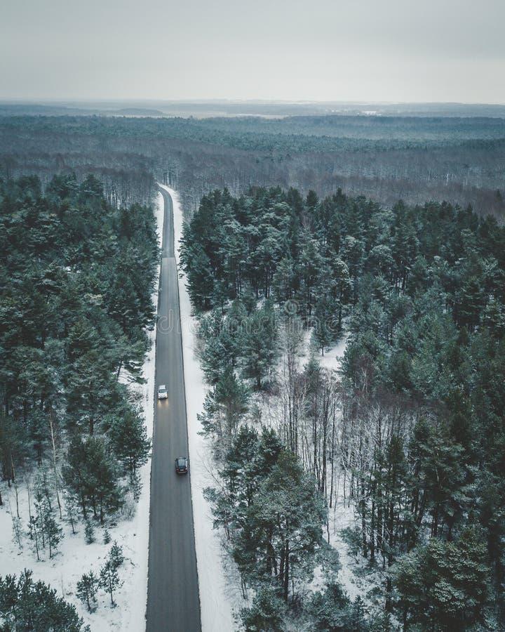 Forêts lettons image libre de droits