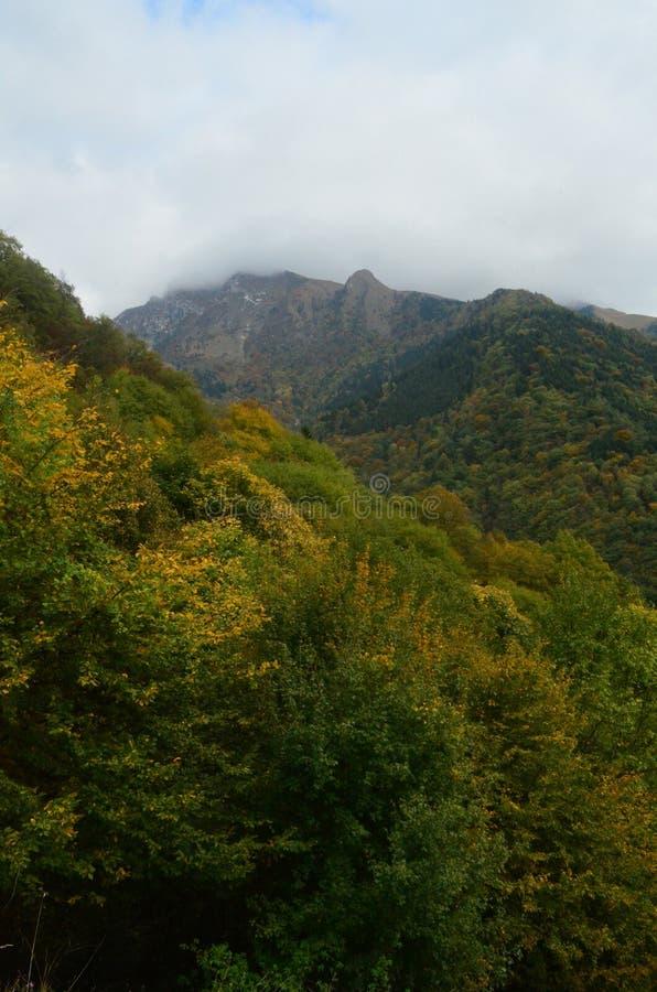 Forêts vertes épaisses couvrant le beau paysage en Italie image stock
