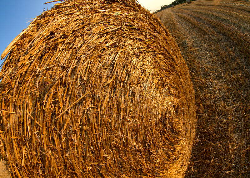 Download Forage stock photo. Image of cutting, harvest, field - 25976660
