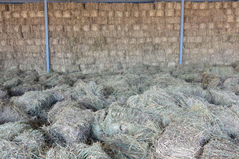 Forage grasses warehouse. The close-up of forage grasses warehouse royalty free stock photo