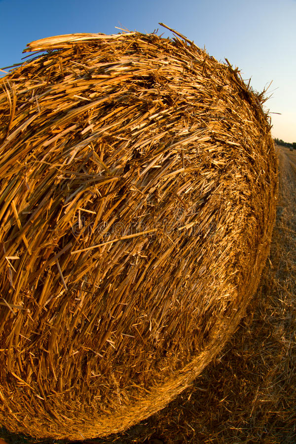 Download Forage round bales stock image. Image of harvest, cutting - 25976659