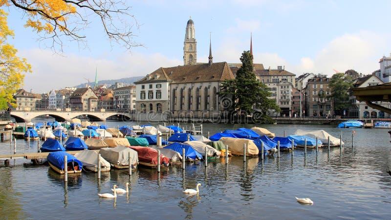 Foraggio bianco del cigno e vista della città di panorama a Zurigo Svizzera immagine stock libera da diritti