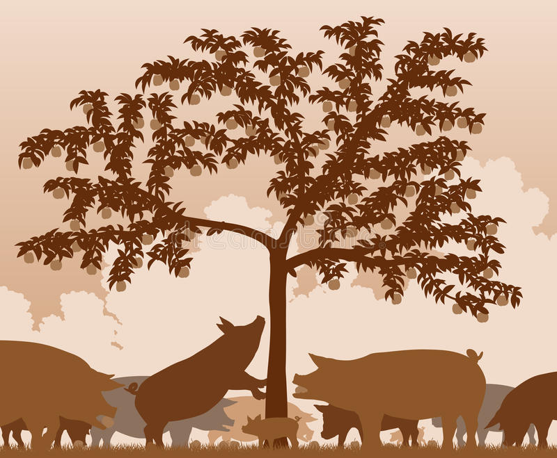 Foraging świnie ilustracja wektor