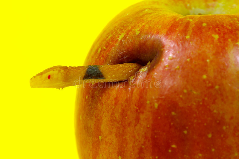 Forbidden Fruit royalty free stock image