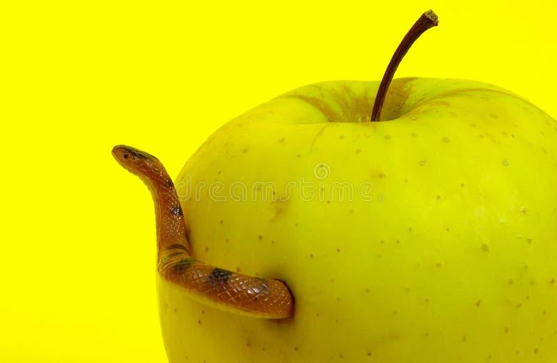 Forbidden Fruit and Snake royalty free stock photos