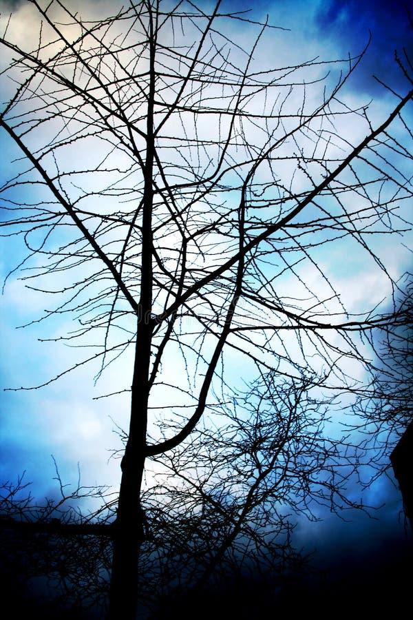 forboding的结构树 免版税库存图片