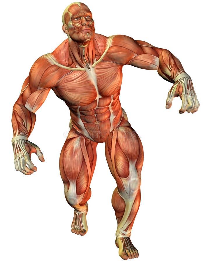 Force de muscle un athlète illustration libre de droits