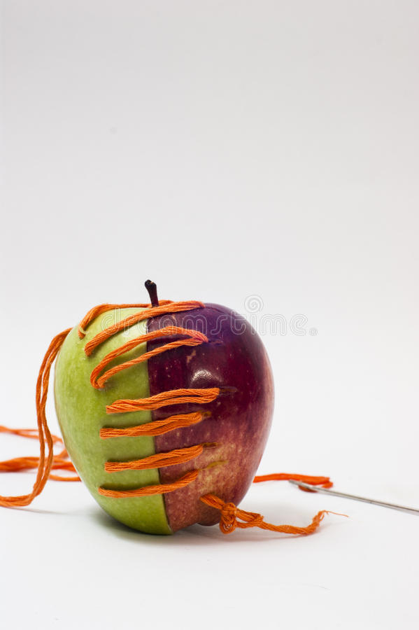 Forced relationships. Half of rope sewn together two apples royalty free stock photos