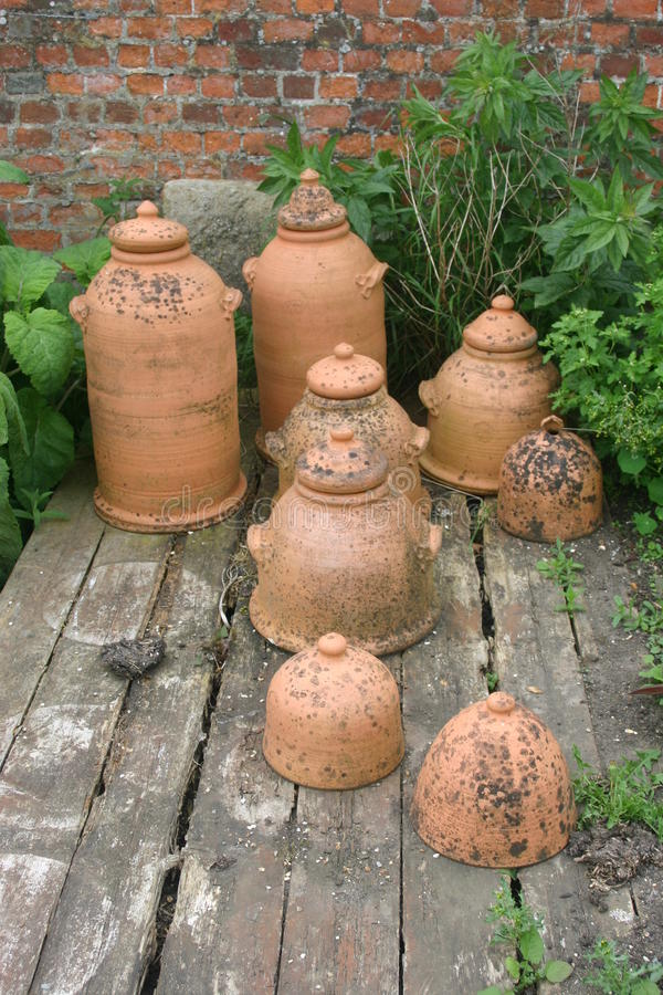 Terracotta rhubarb forcing jars. On old wooden decking with brick wall and plants as background royalty free stock photo