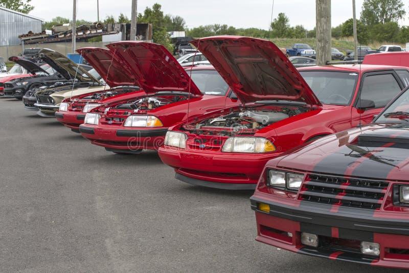 Ford Mustang行 免版税库存照片