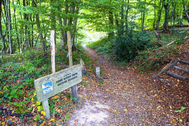 Fore Wood Nature Reserve, Crowhurst, East Sussex, England stock photography