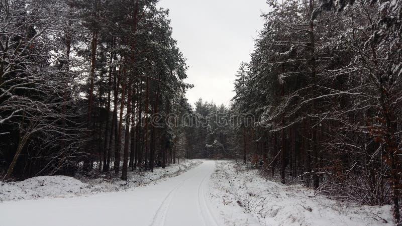 Foredt del invierno del camino foto de archivo libre de regalías