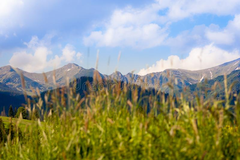 In the foreground blurred grass, and in the background a beautiful range of Tatra mountains in Poland. On a sunny day stock image