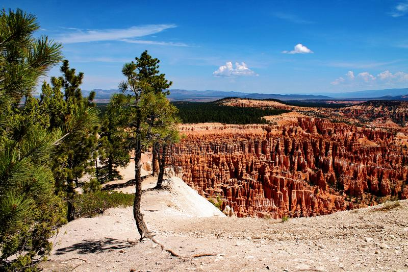 Cliff edge with rock hoodoos and nearby trees in Bryce Canyon, Utah royalty free stock photography